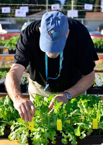 master gardener labeling plants