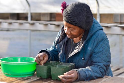 Master Gardener planting pepper seeds