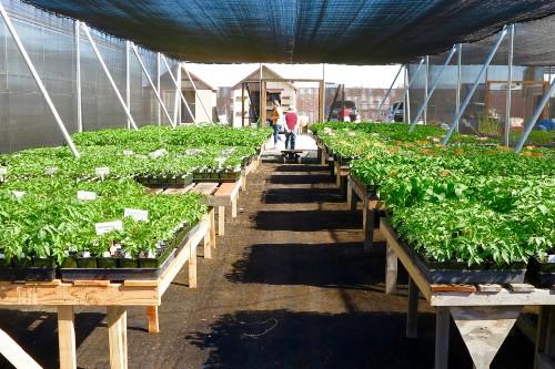 Seedlings in screenhouse