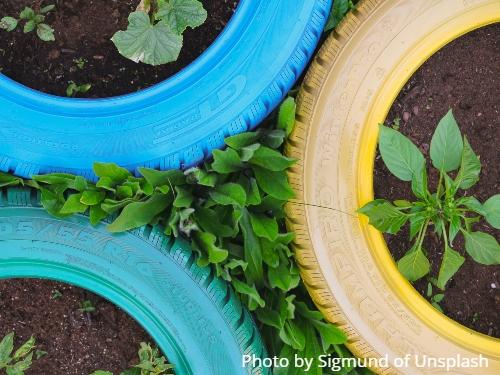 Plants in tires. Photo by Sigmund of Unsplash